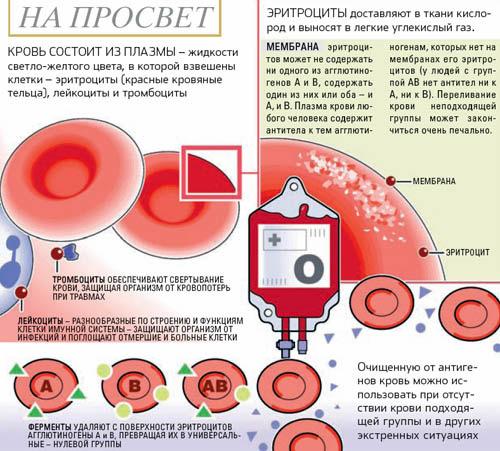 Рфмк ортофенантролиновый тест повышен - 9