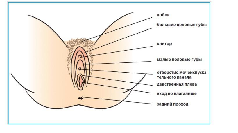 sbornik-analnogo-orgazma
