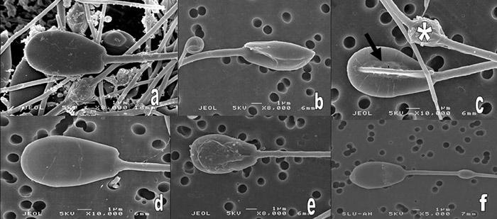 spermogramma-v-moskve-tsena