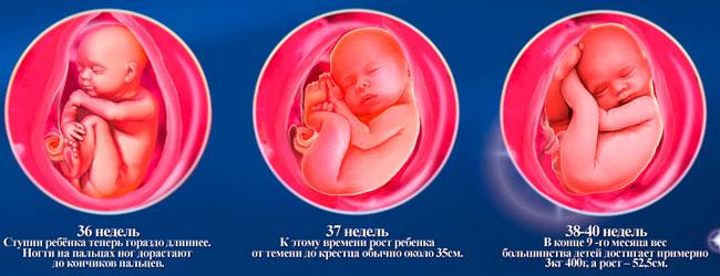 Сердцебиение на 36 неделе беременности