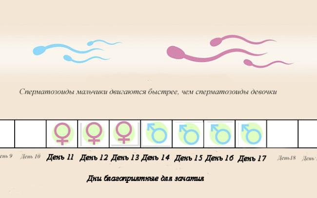 Диагностика сперматозоида на определение пола Качественные